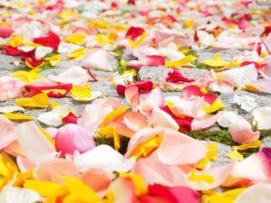 rose-petals-693570_960_720
